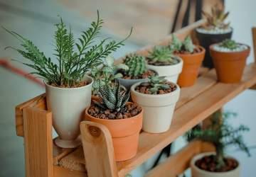 Cómo reconectar con la naturaleza mientras cuidas tus plantas