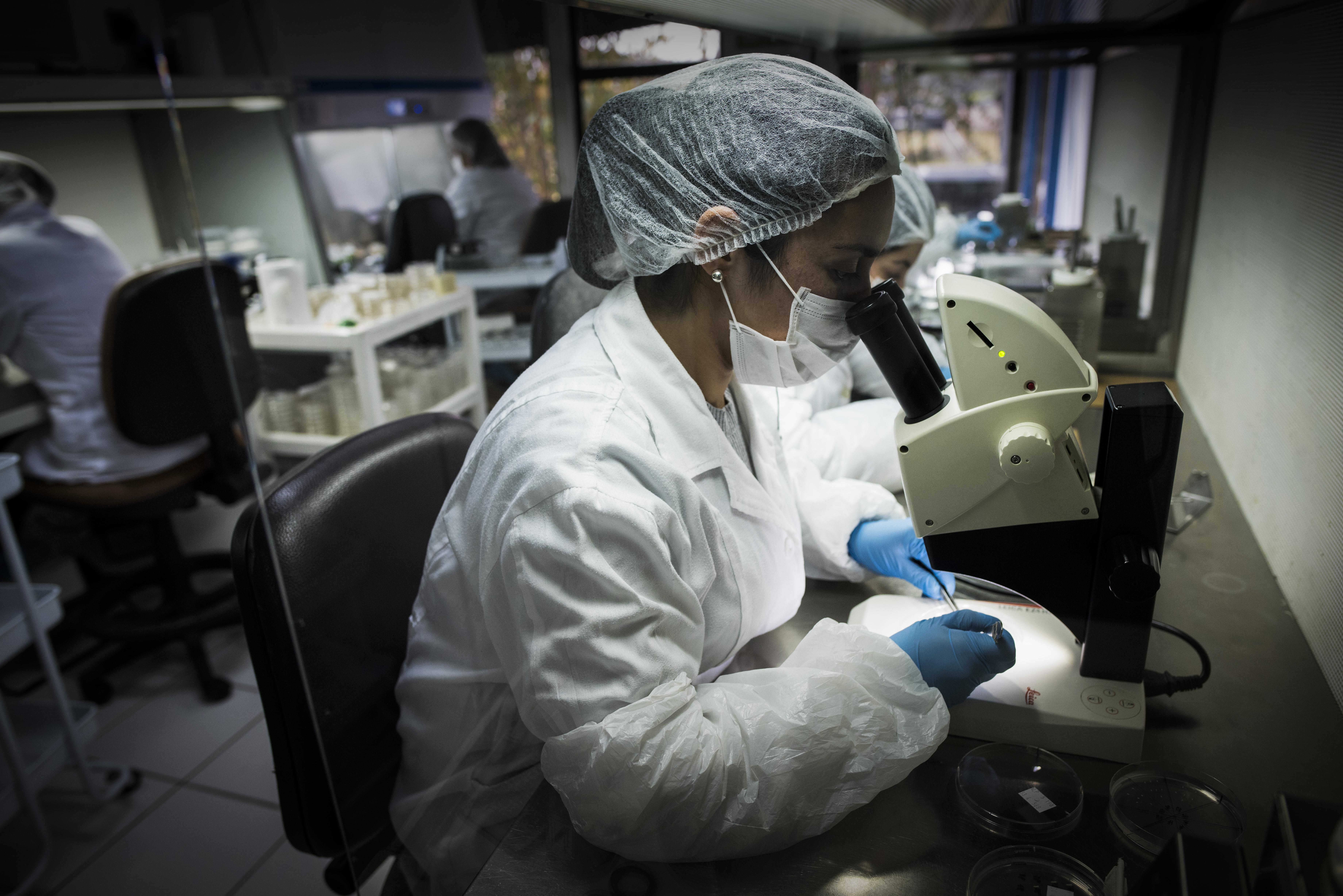 Avanzan en innovadora producción de alcohol gel en base a fibras de celulosa