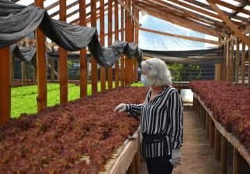 Fresh & Co: La startup que acerca los productos recién cosechados a Santiago
