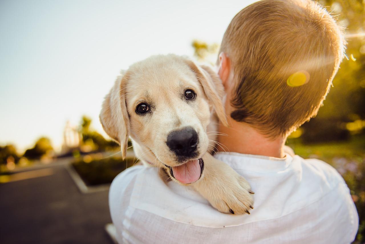 adorable 3344414 1280 - Pet Tech: el millonario negocio de la tecnología para mascotas