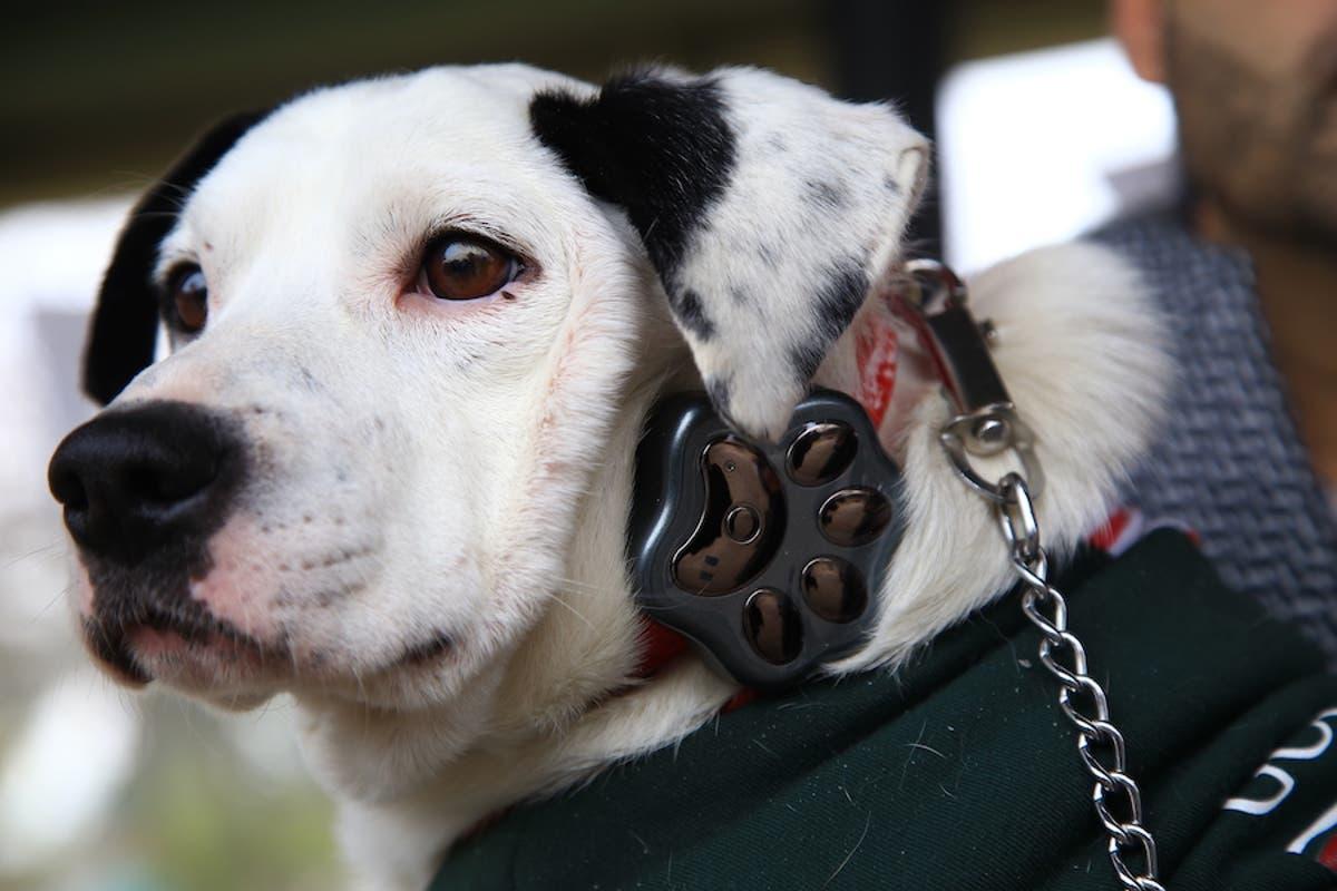 localizador claro - Pet Tech: el millonario negocio de la tecnología para mascotas